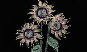 Cách vẽ hoa trang trí trên bảng đen