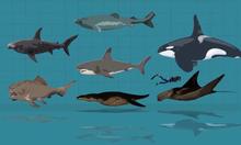So sánh kích thước các loài thủy quái dưới đại dương