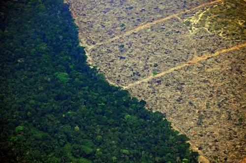 Ảnh từ trên không cho thấy một mảnh rừng Amazonbị chặt phá để lấy đất,cách Porto Velho, thủ phủ bang Rondonia khoảng 65 km hôm 23/8. Ảnh: AFP.