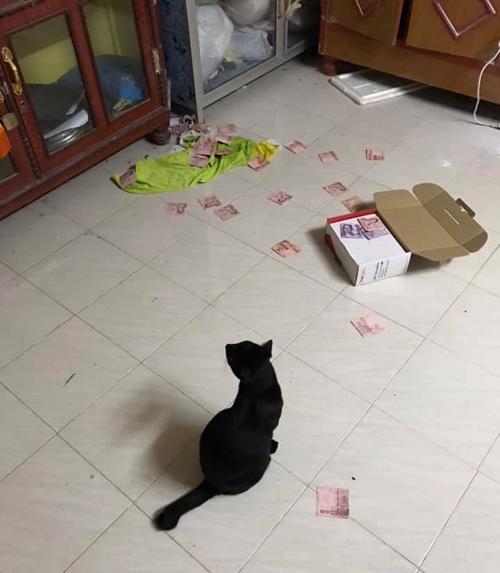 Chiếc hộp rơi xuống để lộ ra quỹ đen của ông chồng.