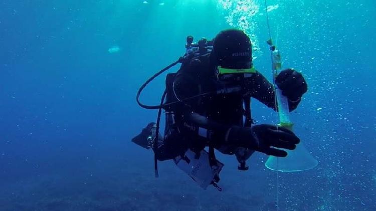 Thợ lặnlấy mẫu nước biển phân tích lượng CO2.Ảnh:Christan Howe.