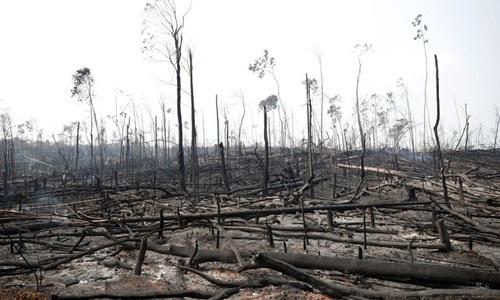 Cảnh rừng tại  Porto Velho, Brazil hôm 23/8 trơ trụi sau đám cháy. Ảnh: Reuters.