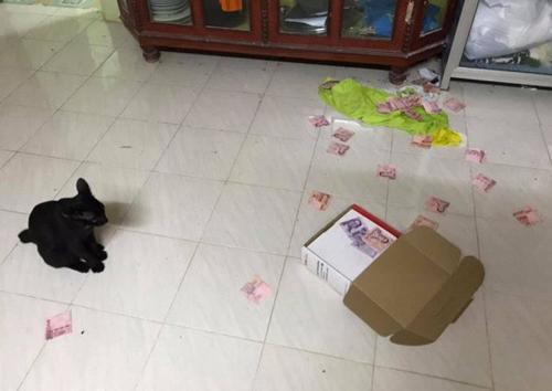 Riêng chú mèo được cô chủ hứa thưởng cho món cá rán yêu thích.