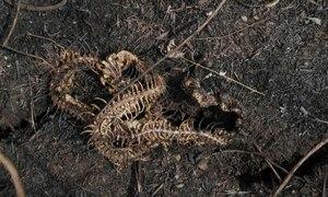 Thảm cảnh sau cháy rừng tại khu bảo tồn Bolivia
