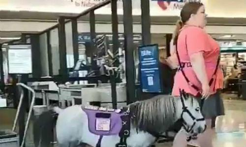 Khách dắt theo ngựa ở sân bay Nebraska, Mỹ hôm 29/8. Ảnh: Twitter/Ewan Nowak.