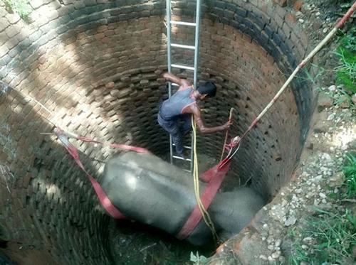 Nhân viên cứu hộ xuống dưới đáy giếng buộc dây vào người con vật. Ảnh: Mirror.