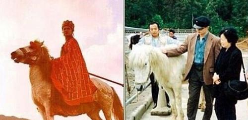 Con ngựa trắng Đường Tăng cưỡi vừa xuất ngũ để chuyển sang làm diễn viên.