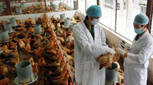 Cách dùng thuốc thú y đúng cách trong chăn nuôi