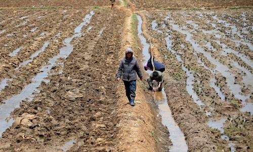 Nông dân Triều Tiên cấy lúa tại một cánh đồng gần thủ đô Bình Nhưỡng hồi tháng 5/2016. Ảnh: Reuters.