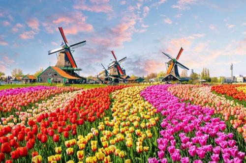 Du học Hà Lan tại các trường top 200 thế giới với mức học phí chỉ từ 0 - 100 triệu trở lên ngày càng phổ biến hơn với du học sinhViệt Nam.