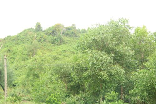 Rừng tự nhiên tại Hà Tĩnh. Ảnh: Dương Lan.
