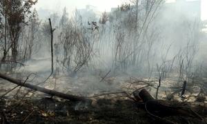 Cháy rừng hoành hành trên đảo Sumatra