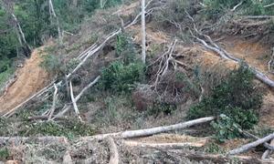 Hơn 2 ha rừng phòng hộ bị chặt phá