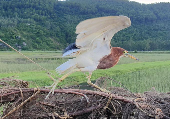 Nạn giăng bẫy bắt chim trời
