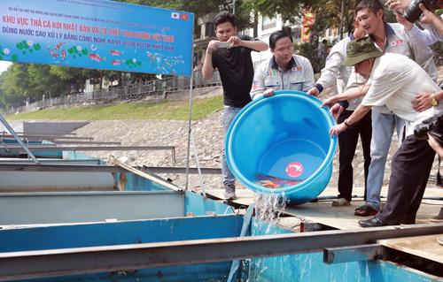 Đại diện Công ty JVE và chuyên gia môi trường thả cá Koi, cá chép ở bể thí điểm làm sạch sông Tô Lịch sáng 16/9. Ảnh: Tất Định