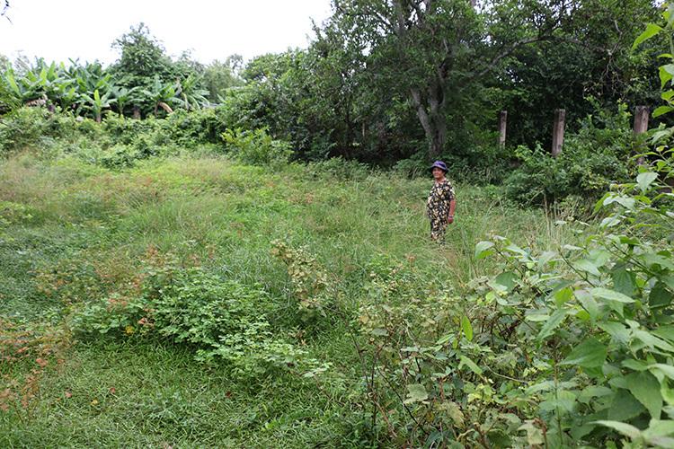 Toàn bộ khu quy hoạch di tích đều đang bị bỏ hoang, cỏ mọc ùm tùm. Ảnh: Hoàng Nam
