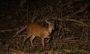 Xem thú đêm ở vườn quốc gia Nam Cát Tiên
