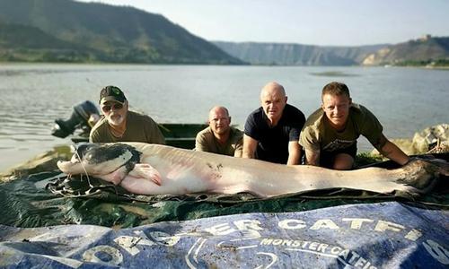 Robert Webb (đội mũ) chụp ảnh cùng con cá nheo mandarin nặng 104 kg. Ảnh: SWNS.