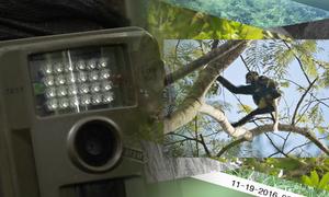Bẫy ảnh trong vườn quốc gia Nam Cát Tiên
