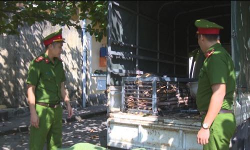 Con hổ nặng 240 kg được nhốt trong lồng sắt. Ảnh: Nguyễn Khánh