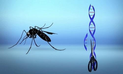 Nỗ lực tận diệt muỗi thất bại thảm hại
