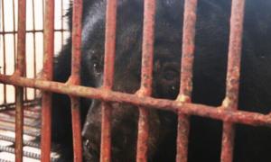 Giải cứu 6 con gấu