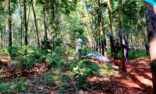 Khu rừng cao su nơi phát hiện xác nạn nhân. Ảnh: Trường Hà.