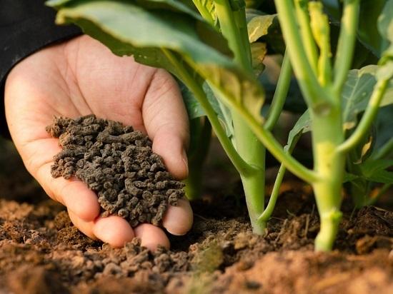 Phân bón hữu cơ góp phần phát triển sản xuất nông nghiệp sạch.