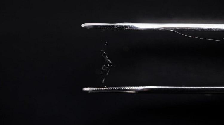 Cellulose từ gỗ và tơ nhện có thể tạo thành vật liệu thay thế nhựa. Ảnh:Scitech Daily