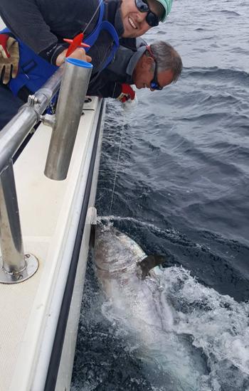 Cần thủ câu được cá ngừ vây xanh nặng hơn 270 kg