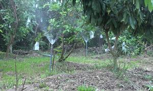 Hệ thống tưới cây tự động của nông dân miền Tây