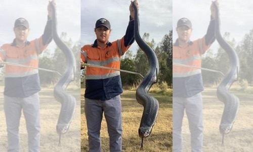 Bryce Lockett và con rắn đen bụng đỏ to lớn. Ảnh: Fox News.
