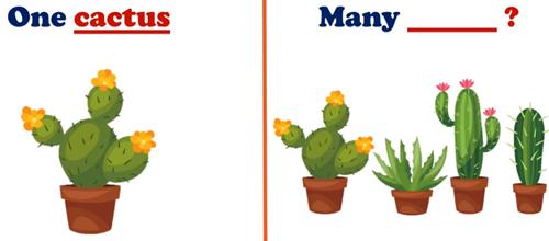 Đoán dạng số nhiều của các danh từ đặc biệt - 4