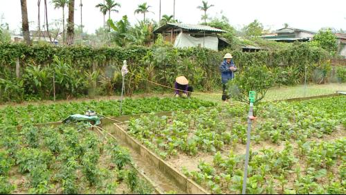 Một góc trong khuôn viên vườn của gia đình ông Nguyễn Xuân Hiến và bà Trần Thị Nga.