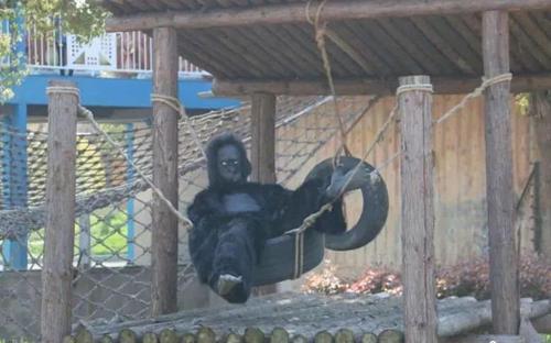 Du khách bất ngờ vì vườn thú dùng thú giả - 2
