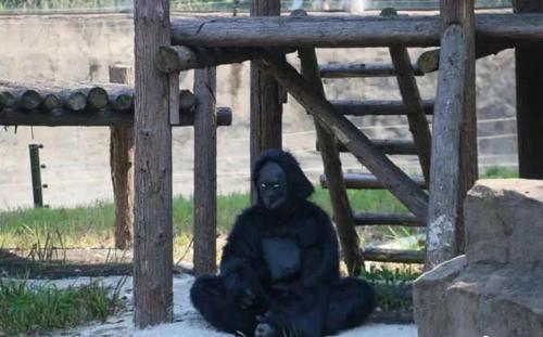 Du khách bất ngờ vì vườn thú dùng thú giả - 3