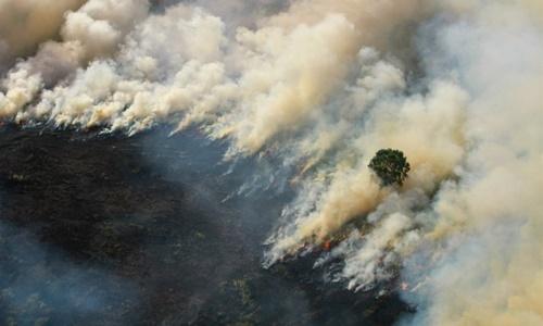 Khói bốc lên từ đám cháy rừng ở Tapin, tỉnh Nam Kalimantan, Indonesia, ngày 29/8. Ảnh: Reuters.
