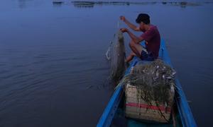 Giăng lưới bắt cá đêm ở vùng lũ Đồng Tháp Mười
