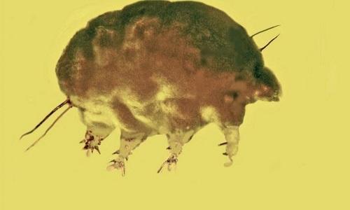 Hóa thạch lợn khuôn. Ảnh: Fox News.