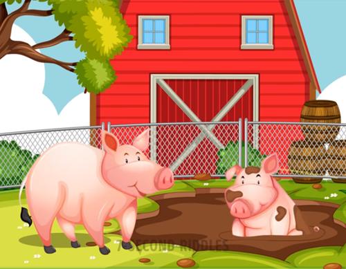 Năm câu đố thử thách hiểu biết về động vật - 1