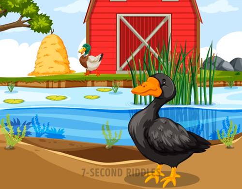Năm câu đố thử thách hiểu biết về động vật - 2