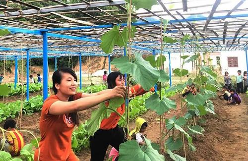 Vườn rau hơn 200 m2 được giáo viên trường tiểu học Trà Tập xây dựng. Ảnh: Trần Tú.