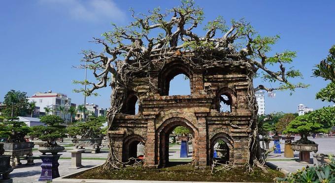 Cây cảnh cổ thụ được triển lãm ở Thanh Hoá