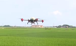 Máy bay không người lái phun thuốc trừ sâu ở Bắc Giang