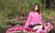 Hoa súng nở rộ trên dòng suối Yến chùa Hương