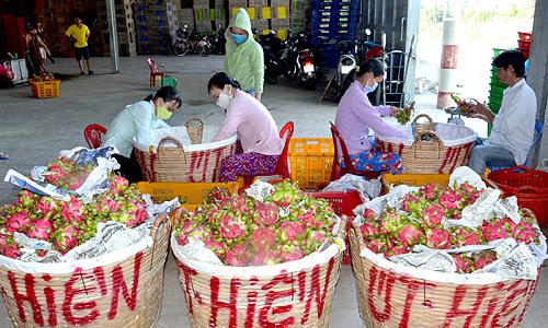 Đẩy mạnh xuất khẩu nông sản vào thị trường Trung Quốc