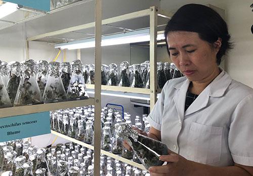 TS Phạm Hương Sơn kiểm tra cây trong phòng nuôi cấy mô. Ảnh: BN.
