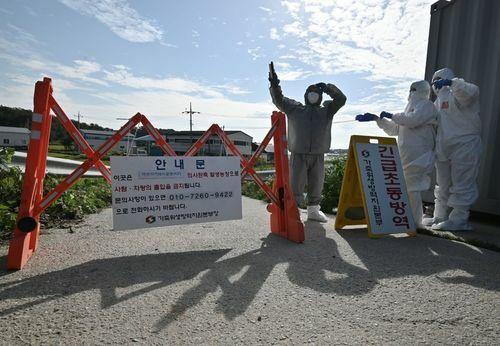 Các quan chức kiểm dịch của Hàn Quốc kiểm soát một con đường gần trang trại ở Paju hôm 17/9. Ảnh: AFP.