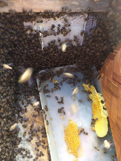 Tiêu đề Đồng Văn: Phát triển bền vững nhờ mật ong bạc hà - 1