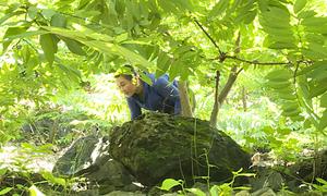 Nông dân Lạng Sơn trồng na giảm nghèo